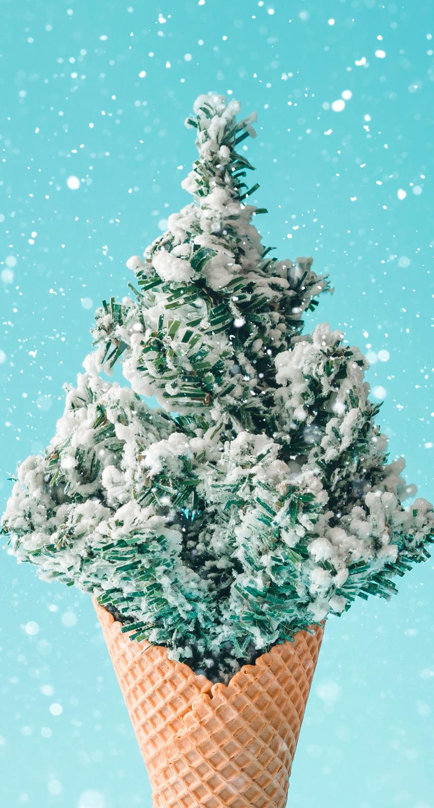 evergreen, conifer