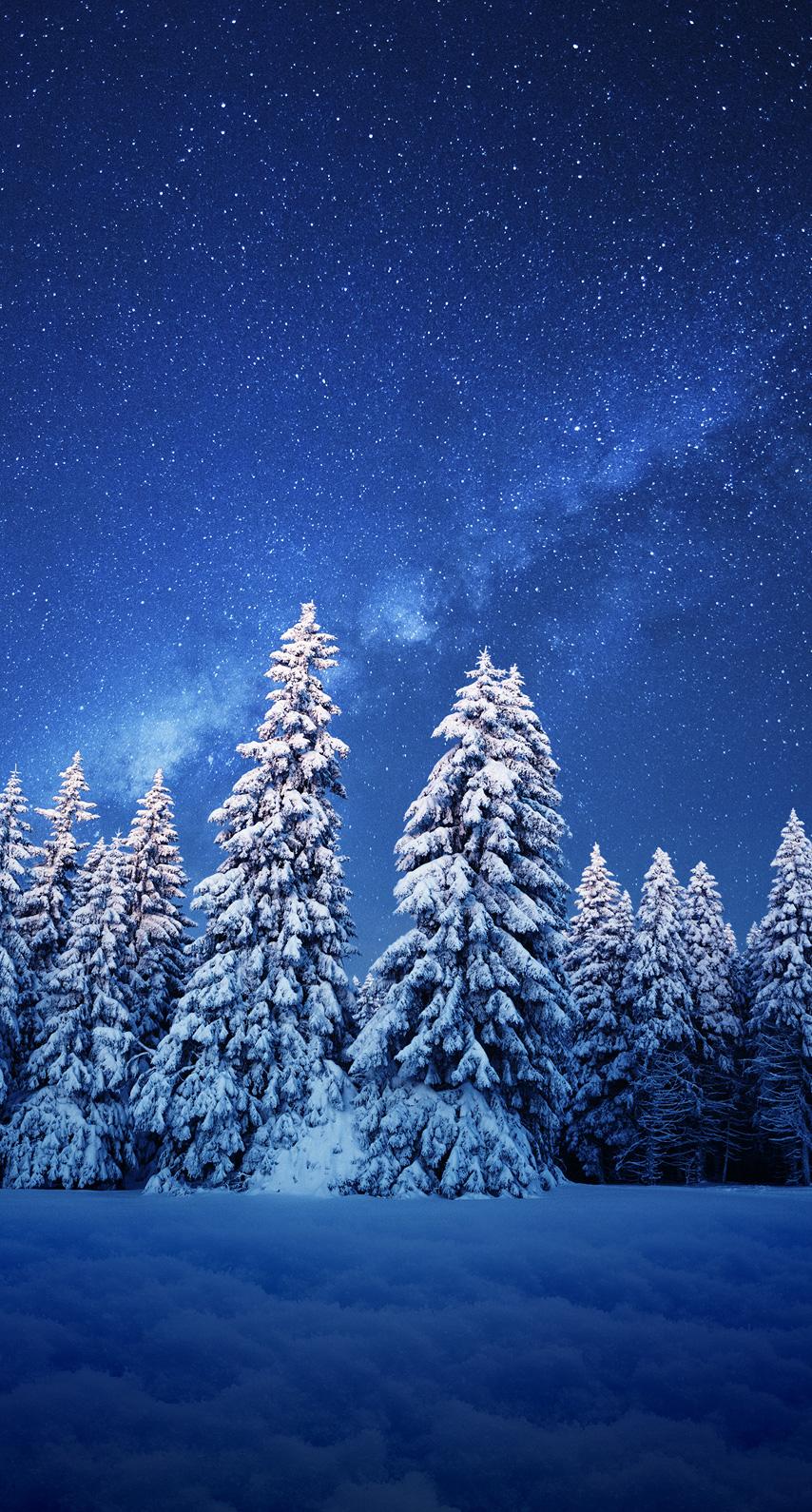 light, tree