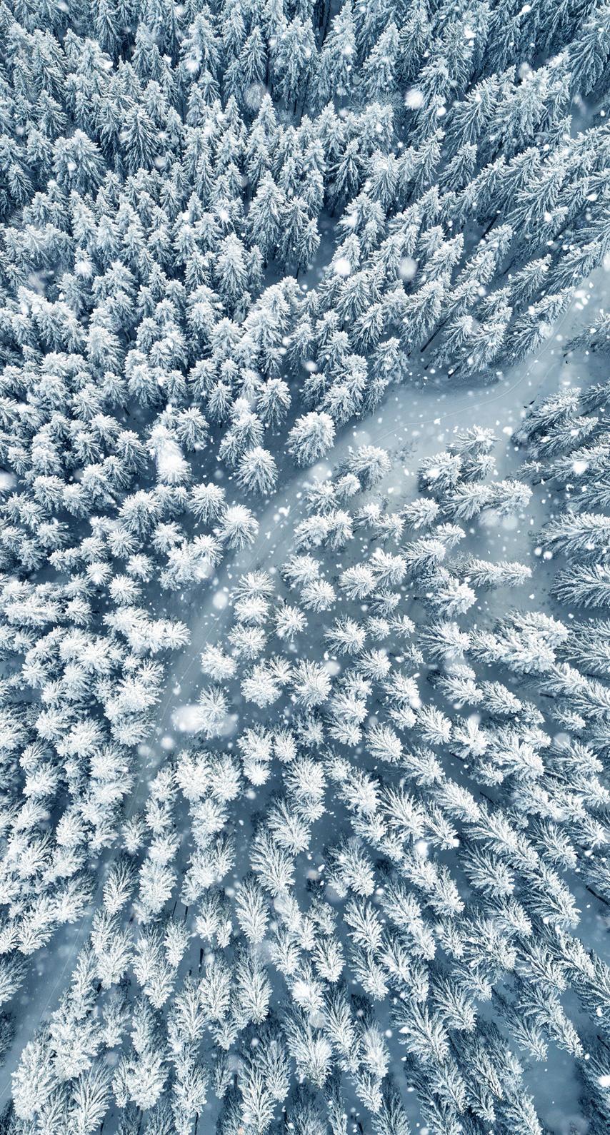 glacial landform, fir