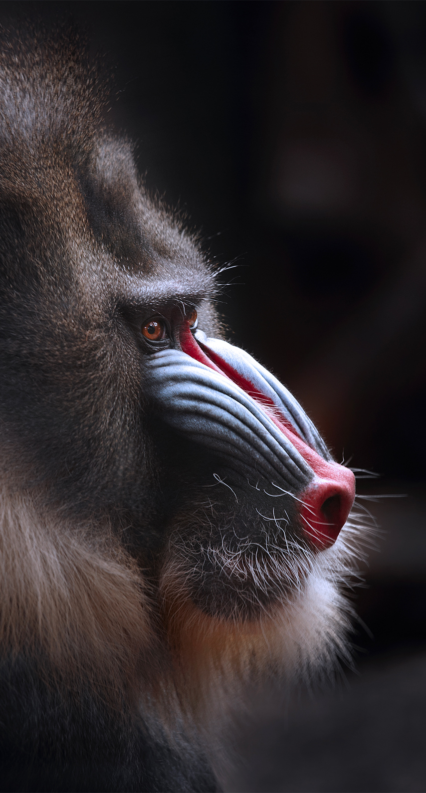nose, primate