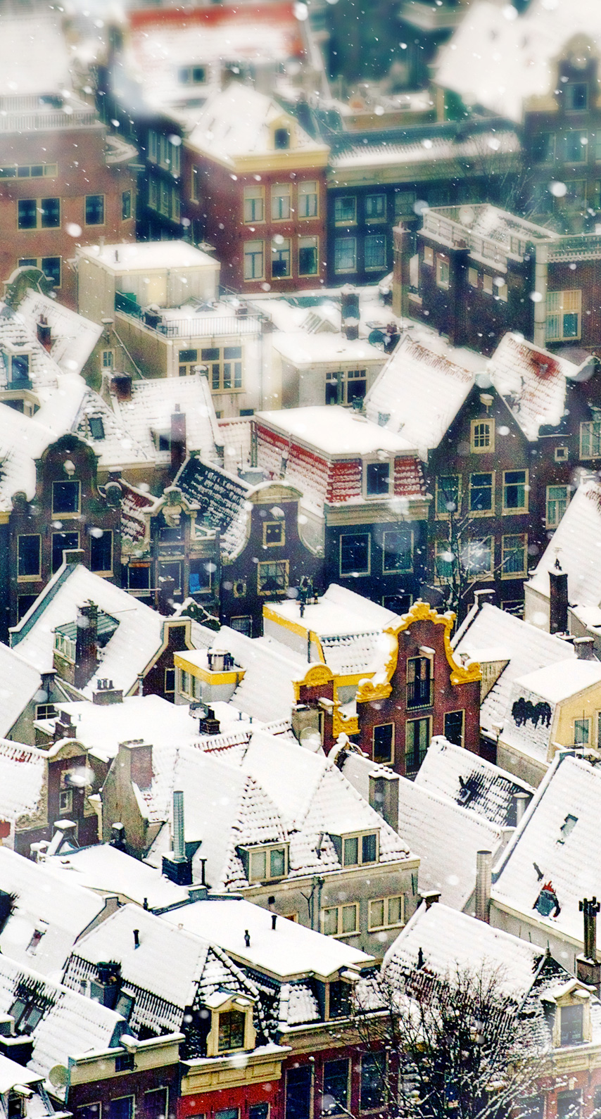 suburb, residential area