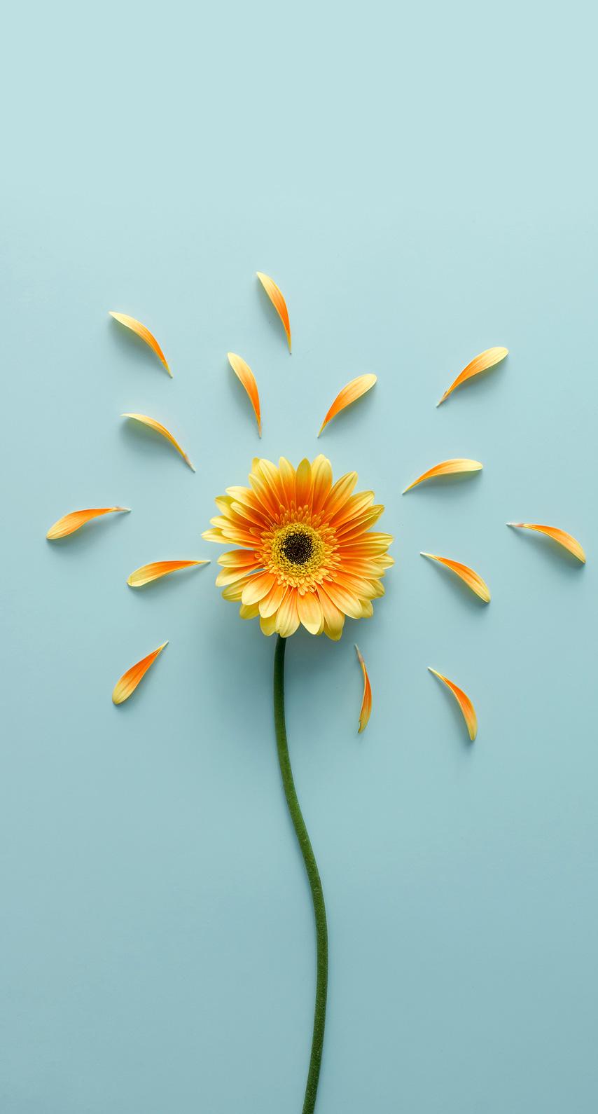 flowering plant, daisy family