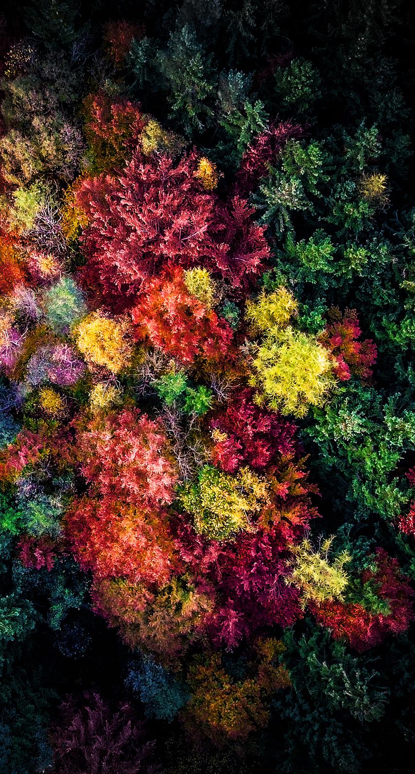 fractal art, organism