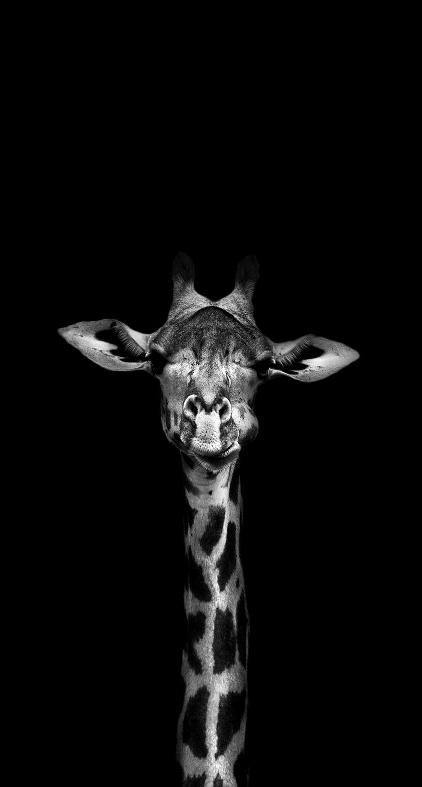 mammal, black and white
