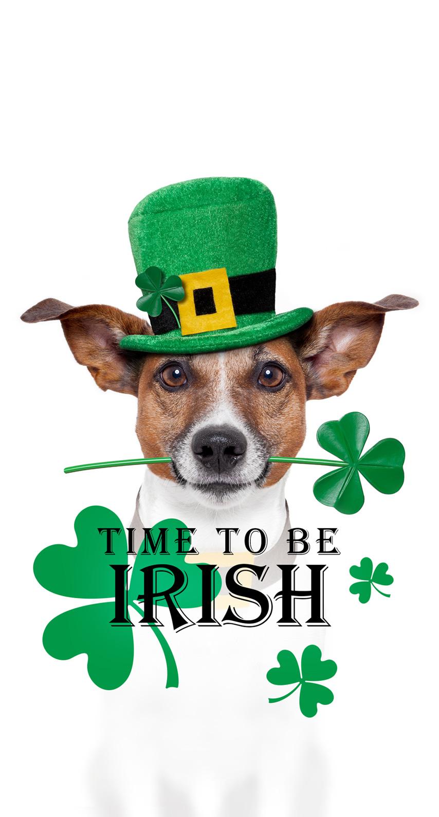 dog breed, irish