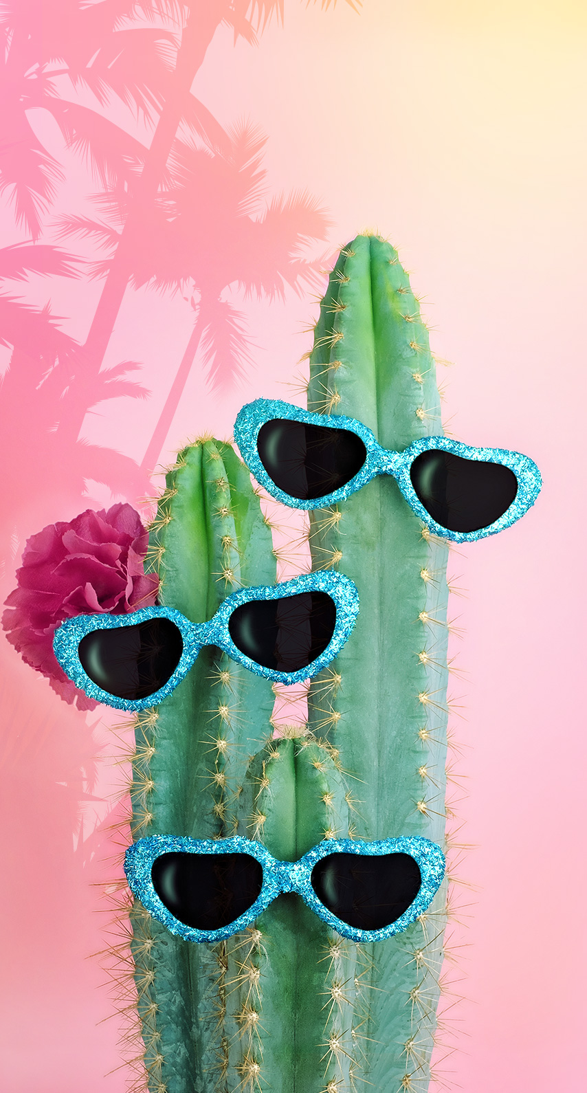 glasses, cactus