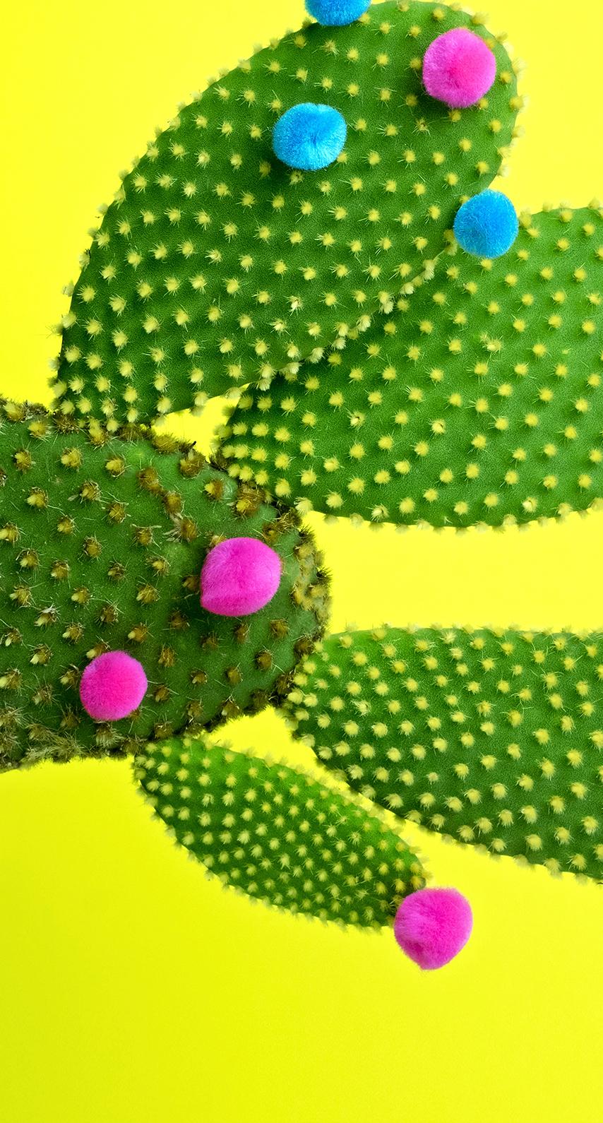 summer, cactus
