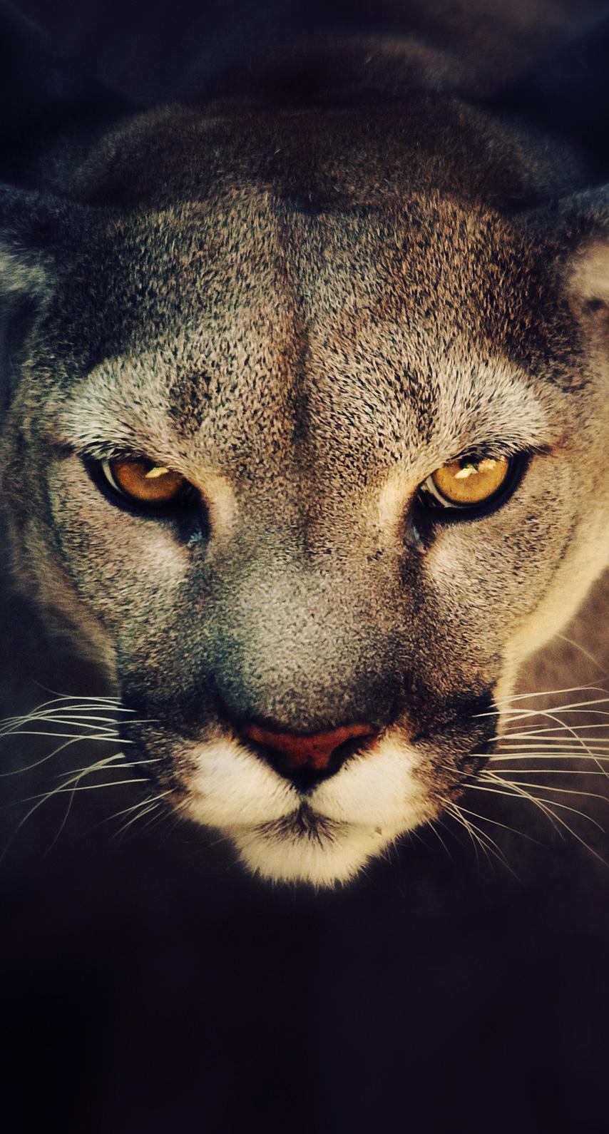 hunter, nose